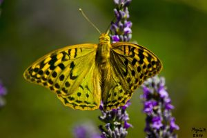 Yellow Butterfly by MezeixP