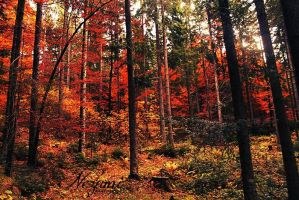 Autumn in Styria's woods 1 by nezumi-photography
