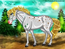 Taima The Indian Pony by TowaTheStallion45