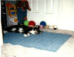 Mr. Tux Baby Picture by bluebellangel19smj