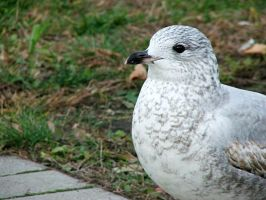 Seagull by NezumiWorks