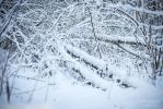Winter forest (2) by Kelshray-photo