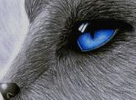 FURRY EYE by sinsenor