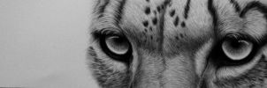 Snowleopard in Graphite by rasberry6