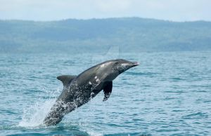 dolphin costa rica by cola93