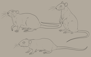 Rat Linearts by Saerl