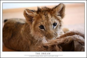 The dream by AF--Photography