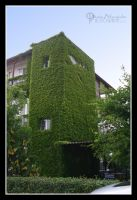 Green Hotel by photozoom