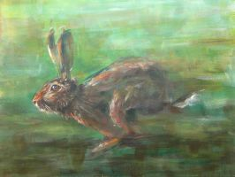 Running Hare by jeroenvv