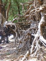 Big Roots on Tree by MogieG123