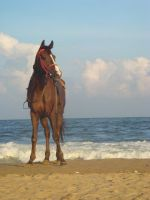 Horse at the beach.... by aaron4evr