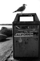 Don't Trash California by iFix