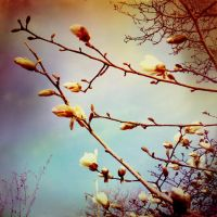 Spring buds against the sky by marisamudd