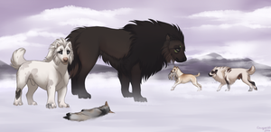 Talma's Antics - Coyote Hunting by Cougar28