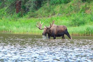 Moose Drool by JYB-Photography