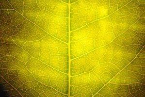 Leaf Texture - One by dotgfx