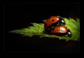 beetles by raun
