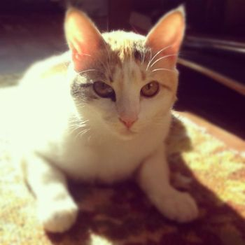 what you want? by Smygl