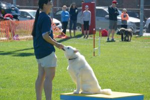 2014 Dog Festival, Agility Contest 13 by Miss-Tbones