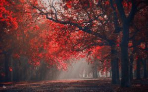 Wake-up Light by ildiko-neer
