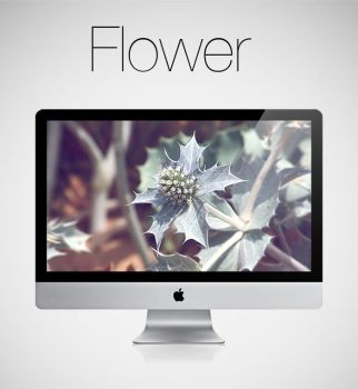Flower HD Wallpaper by infernoragazzo