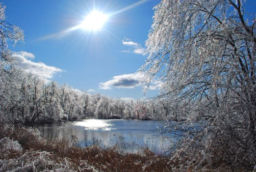 New Jersey Arctic by steven0560