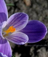 Shades Of March 40 by dandy-cARTastrophe