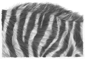 Zebra Mane by rlhIllustration
