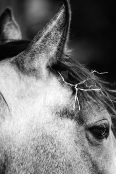 chevaux by valery62100
