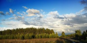 Forest and Sky by Eachra