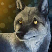 Niosha - British Columbian Wolf by TieWolf