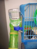 My rats drink Vodka by Kosmu