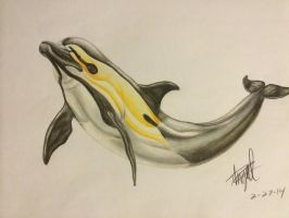 Common Dolphin by SymphonicMischief95