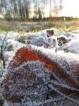 Frost in Sunshine by musicalcat