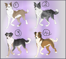 Adoptble Welsh sheepdogs DONE by Skitzifrania