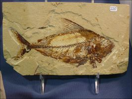 Fossil Fish by Undistilled