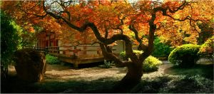 Japanese Garden 16658267 by StockProject1