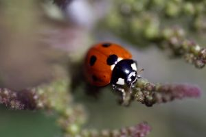 Lady Bug at Home. by AmyAGY