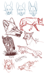 Coyote Sketches 3 by Mongrelistic