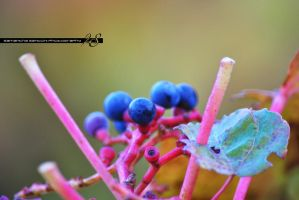 black and violet fruits by 2SDesign