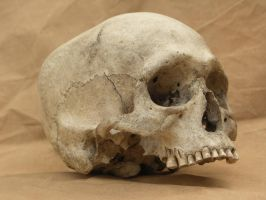 Human skull 10 jpeg by Pronus