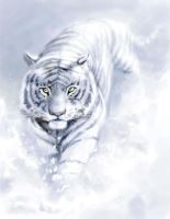 white tiger by redsai01