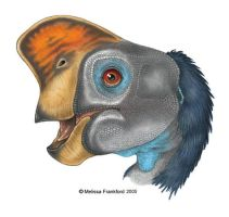 Oviraptor Head Study by mmfrankford