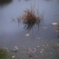 Drowned grass by yuushi01