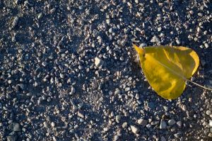 Yellow Leaf Bathed in Shadow by gorillameister