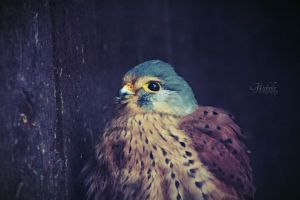 Little falcon by MichisArt