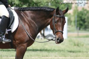 Quarter Horse Stock 71 by tragedyseen