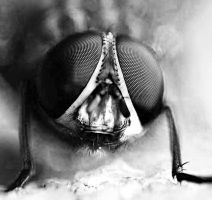 Compound Eyes by 21711