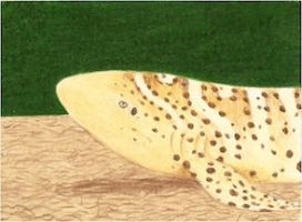 Day 18: Zebra Shark ACEO by whitetippedwaves