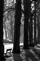 trees by CorinnD